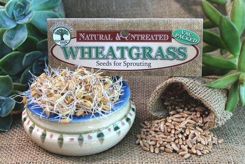Wheatgrass seeds Botanical name: Triticum aestivum