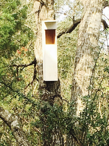The best time to hang your OwlReach Nest Box