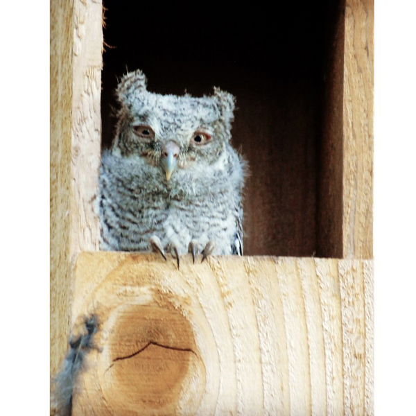 [owl boxes] - OwlReach