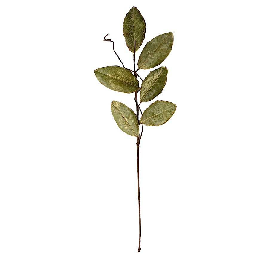 30 in. Gold Edged Magnolia Leaf Stem
