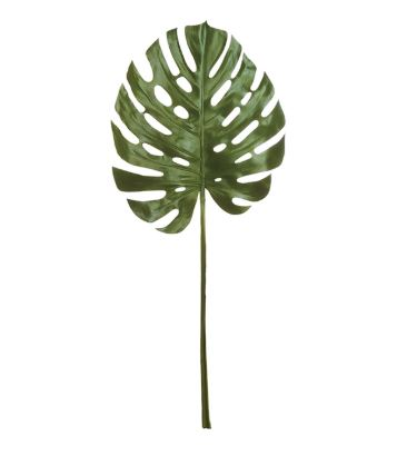 Monstera Leaf 49