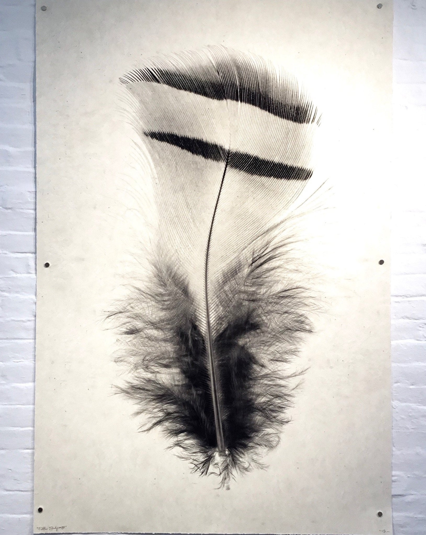 Barloga Studios Grand Format Feather Print
