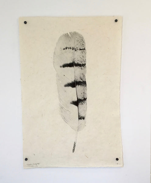 Barloga Studios Feather Study #8 Print (Hawk)
