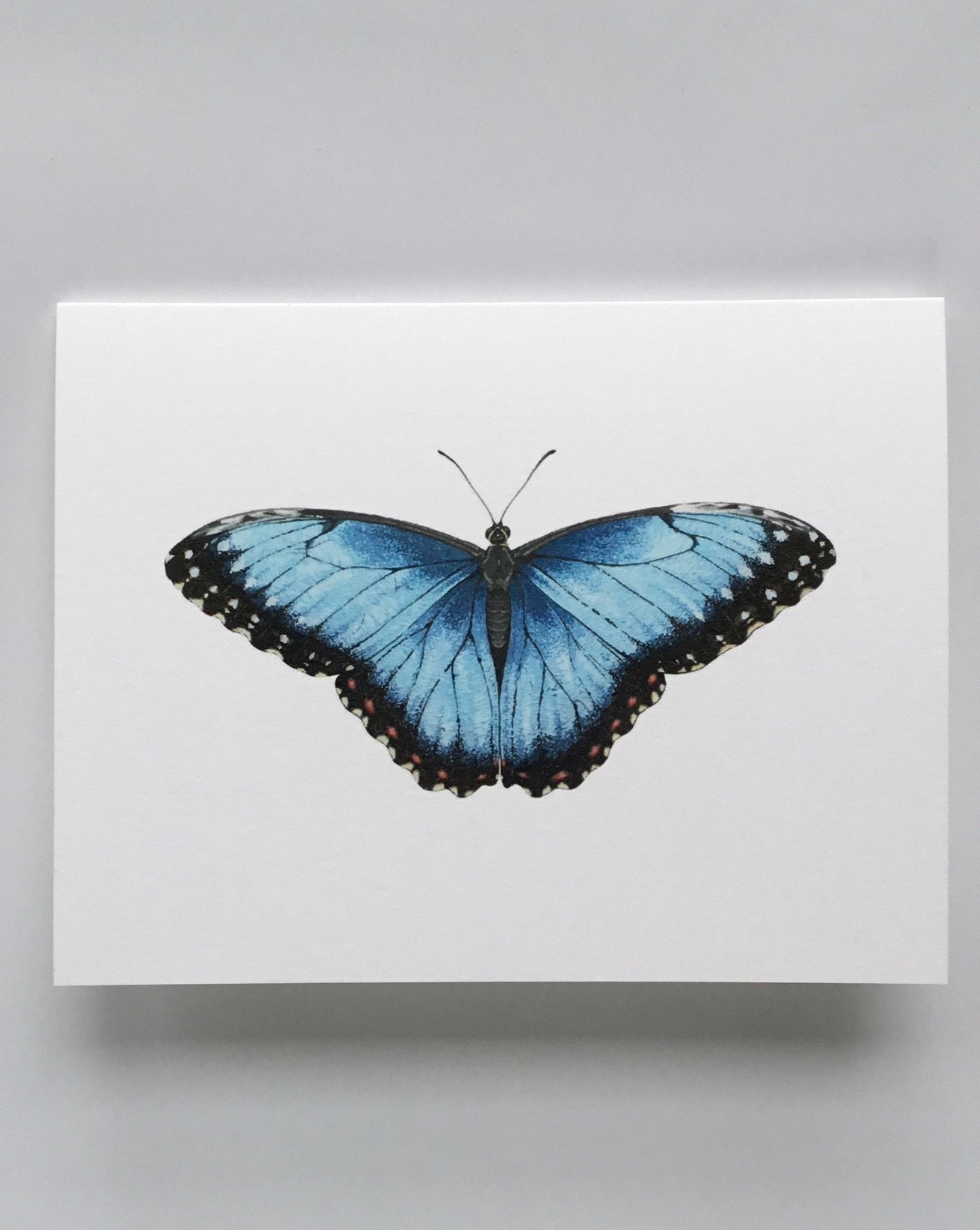 Open Sea Blue Morpho Card