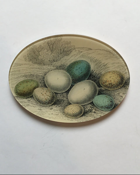 John Derian Oval Dish with Eggs