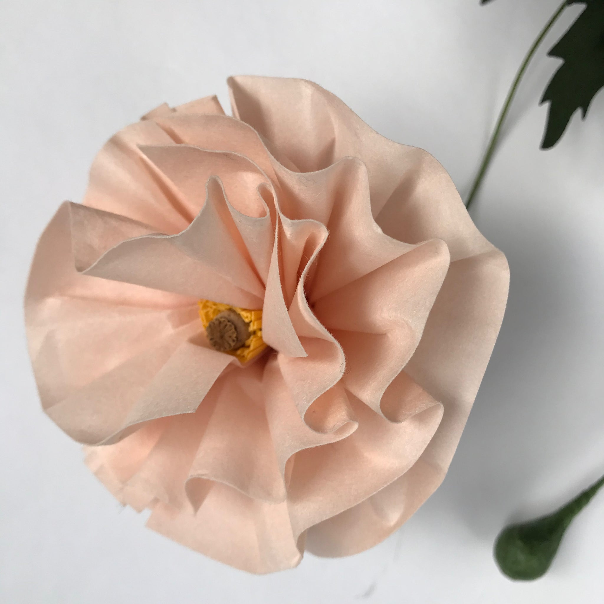 Paper Eden Poppy in Peach