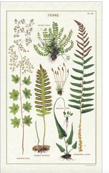 Cavallini Fern Tea Towel