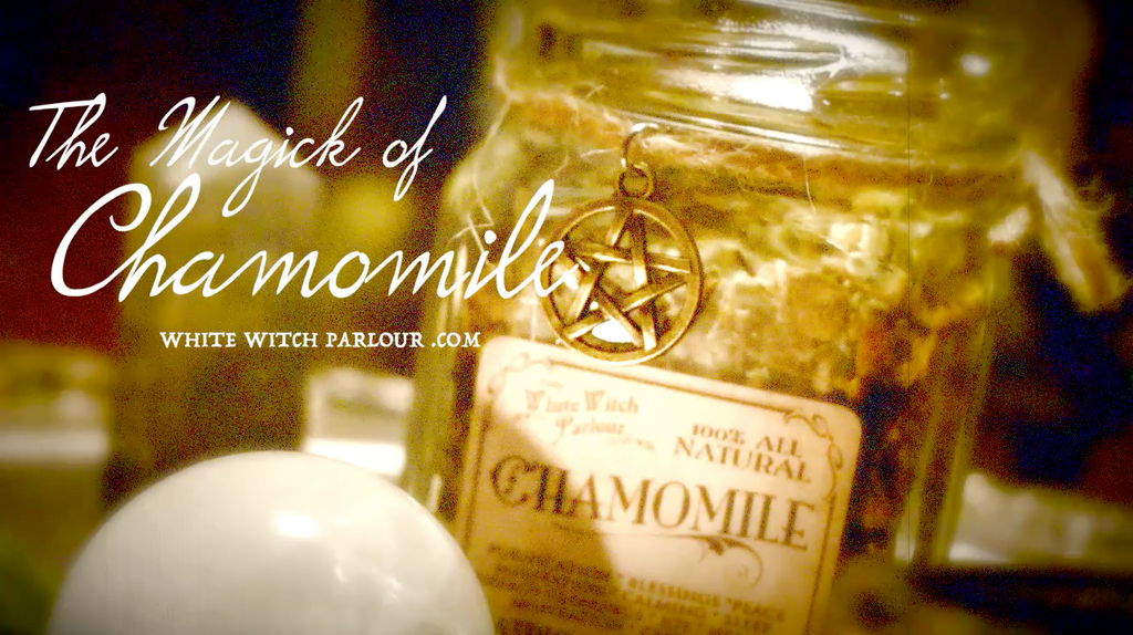 The Magick of Chamomile