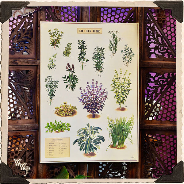 'GARDEN HERBS' BOTANICAL POSTER. Vintage Style Print For Sacred Space Decor