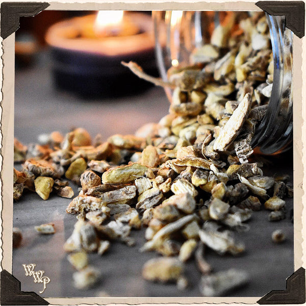 GINGER ROOT Dried Herb Zingiber Officinale. For Grounding, Balance & Success.