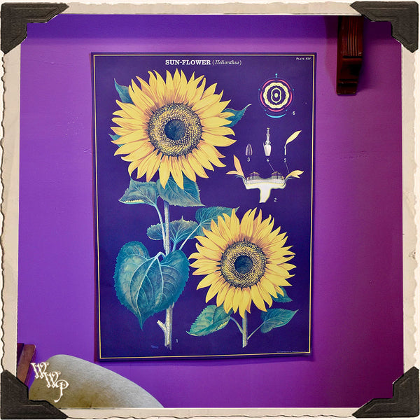 ' SUNFLOWERS ' BOTANICAL POSTER. Vintage Style Print For Sacred Space Decor