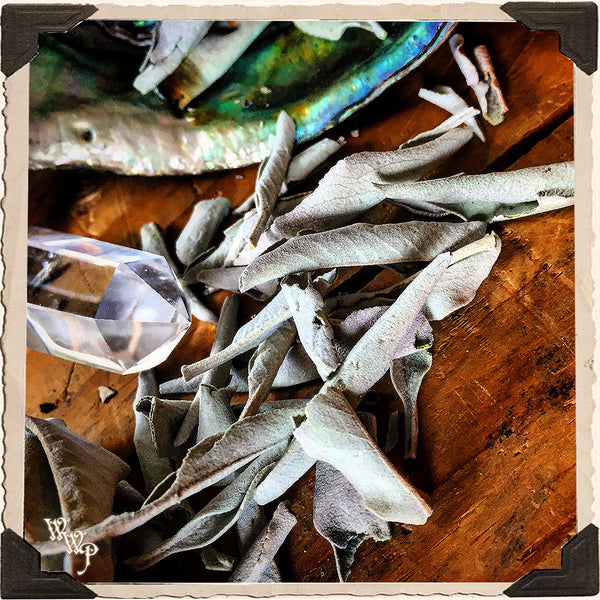 WHITE SAGE APOTHECARY. Dried Herbs. For Purification, Wishes & Ceremony.