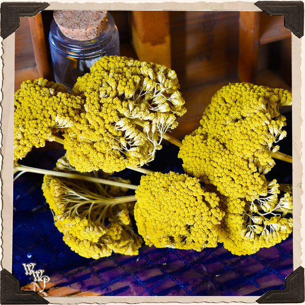YELLOW YARROW DRIED BOTANICAL. Decorative Herb For Courage, Healing & Love.