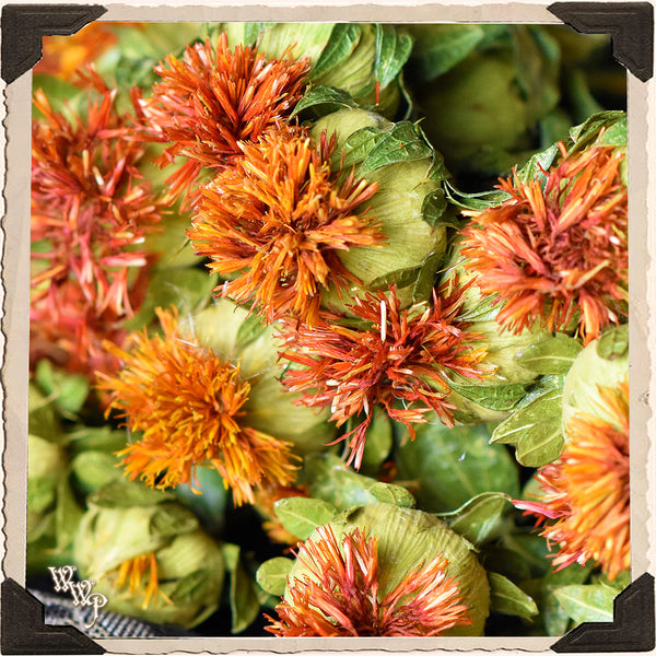 SAFFLOWER DRIED BOTANICAL. Decorative Herb For Dominance, Power & Spell Breaking