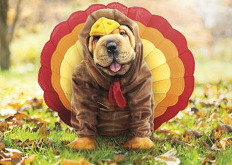 BFCM Thanksgiving Tips for Dog Owners Geartac News