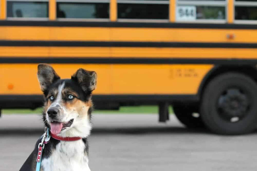 Back To School Effects Your Dog Too