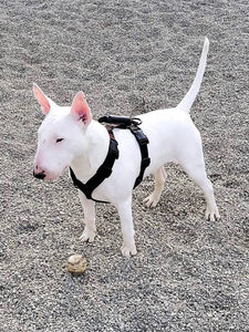 GEARTAC XBODY DOG HARNESS