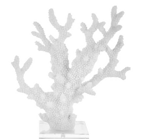 White Coral on Acrylic Base 13""