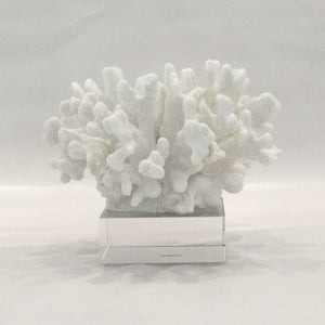 Medium White Coral Sculpture on a Glass Stand #2