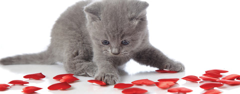 Valentine's Day-Kitty Hearts