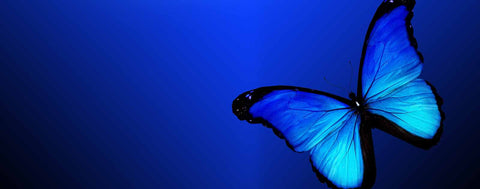Butterflies-Blue Butterfly on Blue Background