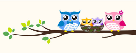 Birds-Owl Family White