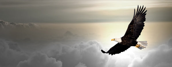 Birds-Bald Eagle Flying Above Clouds