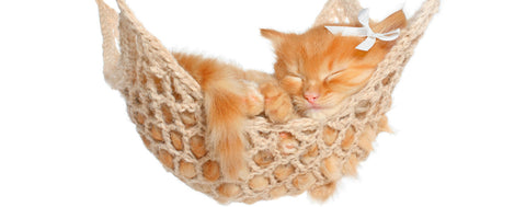 Cats-Kitten in hammock