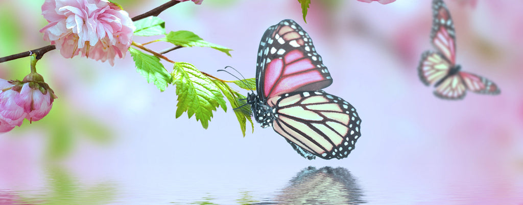 7b1a1f1d9 Pink Butterfly on Cherry Blossoms – LightHeaded Beds