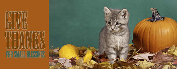 Thanksgiving-Give Thanks for Small Blessings Kitten