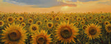Flowers-Field of Sunflowers in Tuscany
