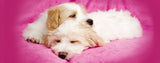 Dogs-Pink Sleeping Puppies