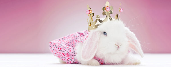 White Baby Rabbit with a Crown