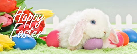 Easter-Happy Easter Bunny