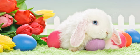 Easter Rabbit with Tulips & Eggs