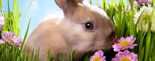 Rabbit Smelling Flowers