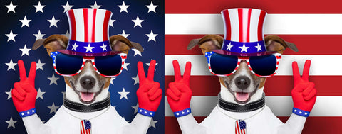 USA Decked Out Dog