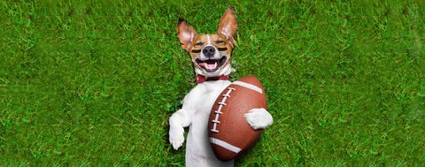 Dogs-Football Dog