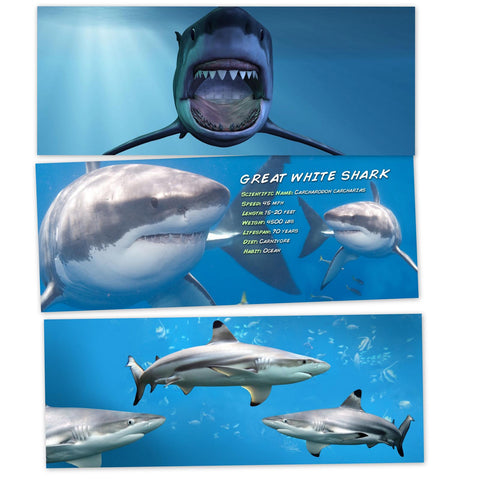 Swimming Sharks 3 Piece HeadLight Image Value Pack
