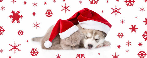 Christmas-Sleeping Christmas Kitten & Puppy
