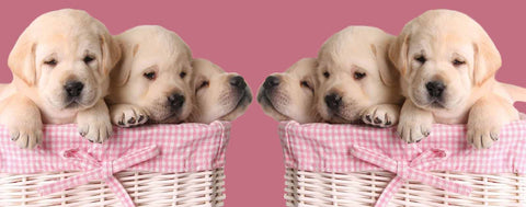 Puppies in Pink Baskets
