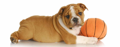 Dogs-Bulldog Basketball