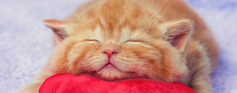Cats-Sleeping Kitten on Pillow
