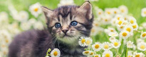 Cats-Kitten in Flowers