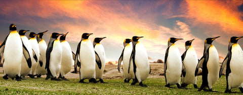 Penguins Enjoy Breathtaking Sunset