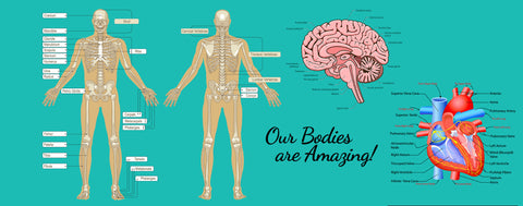 Our Amazing Body