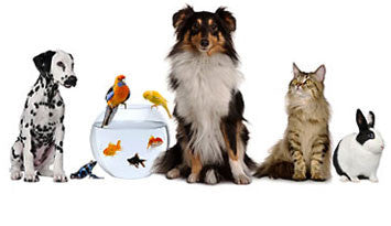 Pet Care And Supplies
