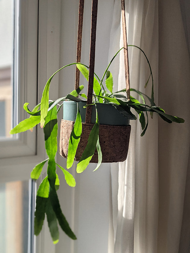 Handmade cork fabric plant hanger in front of a window