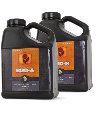 Heavy 16 Bud B Gallon (4L), 4/cs