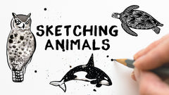 How to draw animals - skillshare class